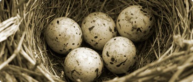 Pierres arides  (Terminée) Oeufs-oiseaux